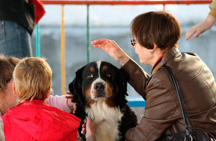 Общение с собаками