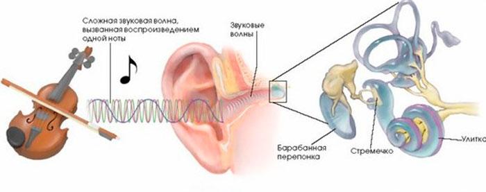 Механизмы лечебного действия музыкотерапии