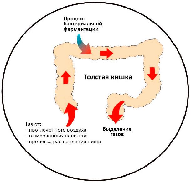Процесс образования газов в кишечнике