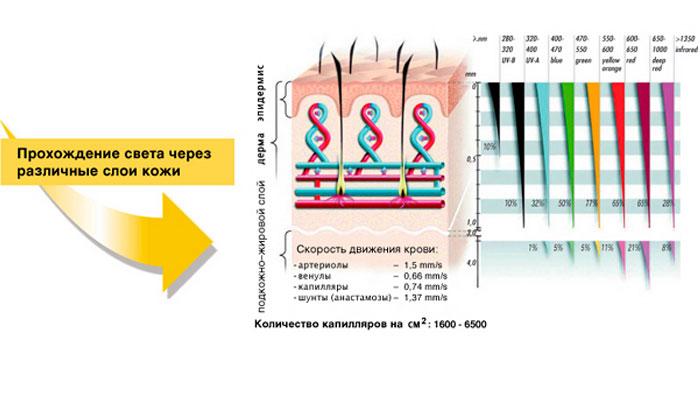 Прохождение света биоптрона через различные слои кожи