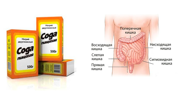 Сода в организме человека