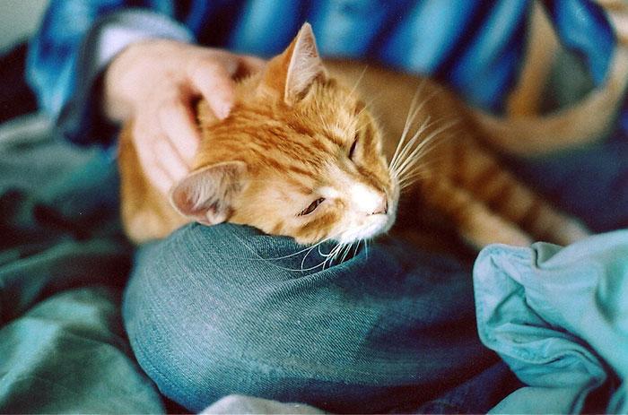 Кошка лечит человека