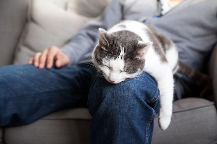 Лечебное воздействие кошки на человека
