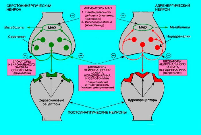 Механизм действия антидепрессантов