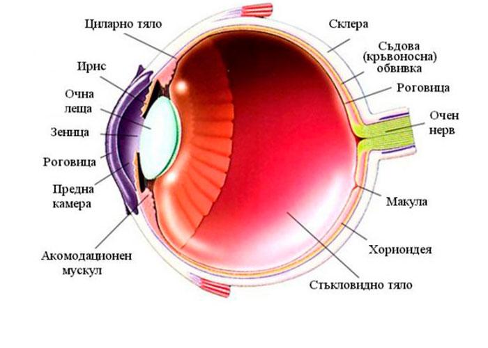 Структура глаза при вторичной глаукоме