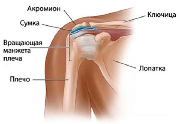 Изображение - Субакромиальный бурсит левого плечевого сустава subakromialnyy-bursit-plechevogo-sustava-stroenie