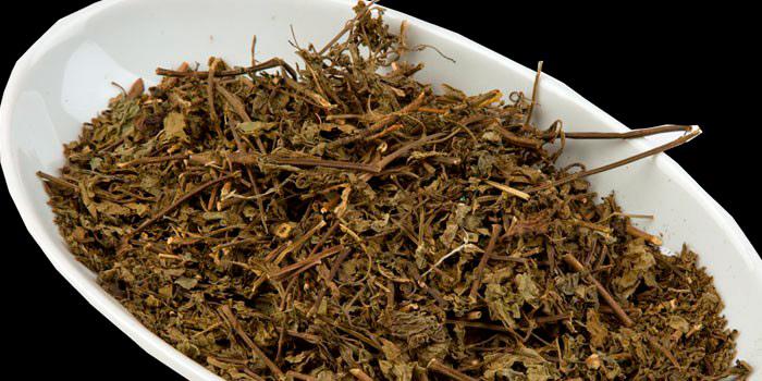 Заваривание почечного чая