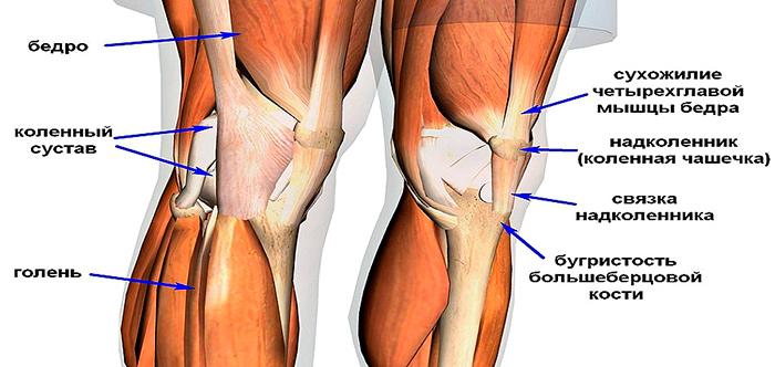 Симптомы тендита коленного сустава